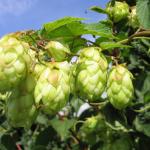 【ドイツ】4月のクラフトビールとビールイベント情報!