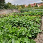 【ユネスコ世界遺産】バンベルク都市農業地区と伝統野菜~ドイツ~