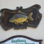 【ドイツグルメ】フランケン地方 鯉料理と鯉の養殖名産地 Aischgrund